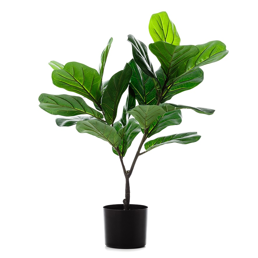 Home republic fiddle fig potted plant homewares pots for Green floor plant